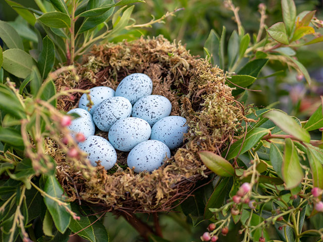 Blue Jay Eggs