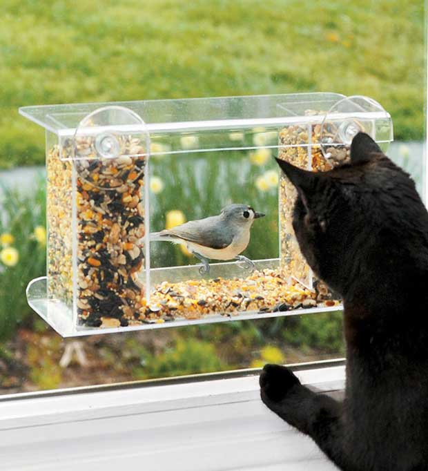 Cat Watching Birds