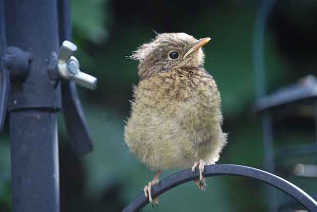 Helping Baby Birds Bird Spot