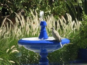 Collared Dove On Bird Bath