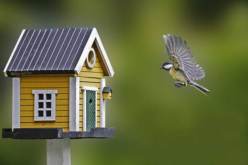 Bird Flying Into House