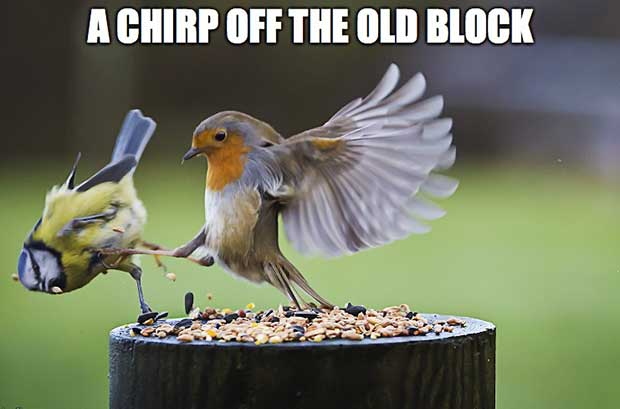 A Chirp Off The Old Block