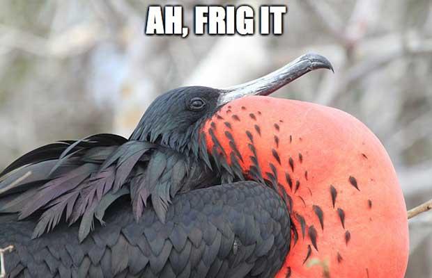 Ah, Frig It