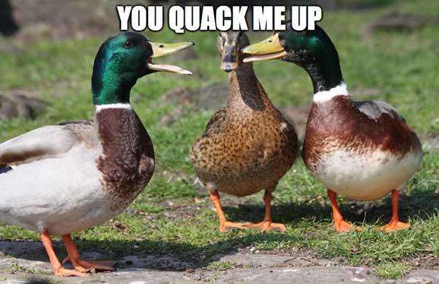 You Quack Me Up