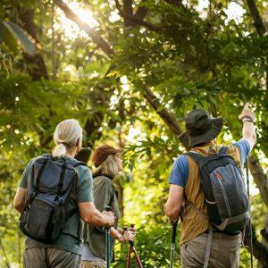 Bird Watchers In Woods