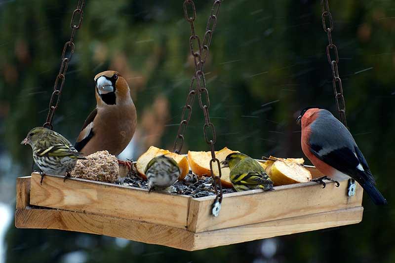 Garden Birds On A Bird Table