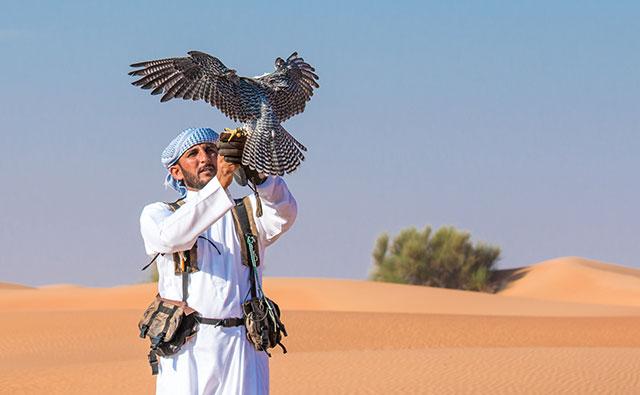 Falconry In Dubai