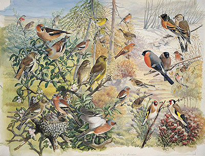 The Finches Jigsaw Puzzle