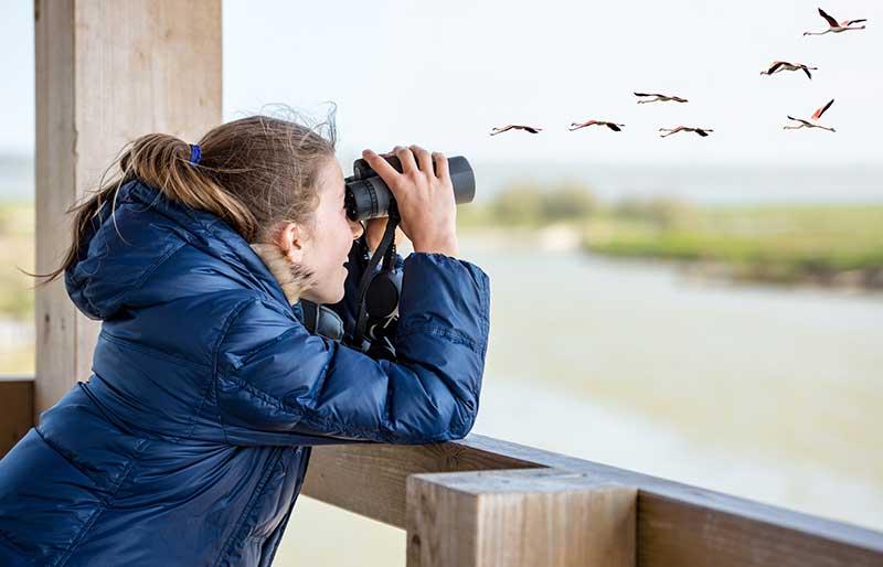 Girl Watching Birds