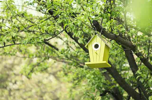 Green Bird Box