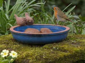 Robin On Bird Bath