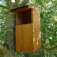 Owl Nesting Box