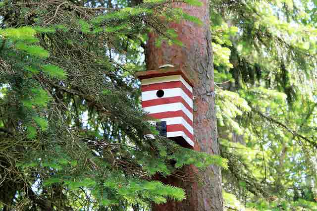 Red And White Bird Box