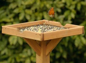 Robin On A Bird Table
