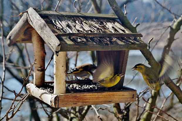 Rustic Wooden Bird Table