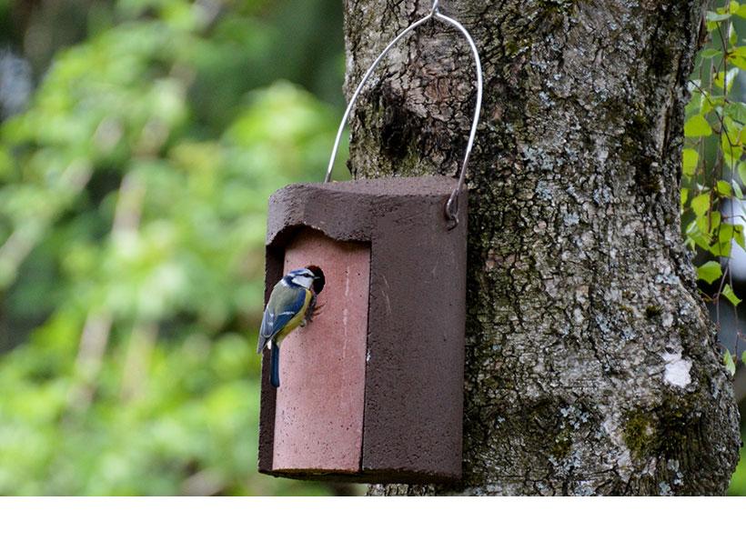Schwegler 1B Nest Box