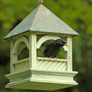 Starling On Bird Table