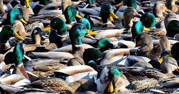 Collective Nouns For Birds Bird Spot