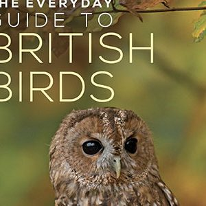 British Birds Identification Guides