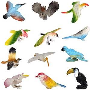 Bird Models