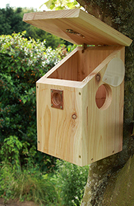 Cedar Bird Box With Camera