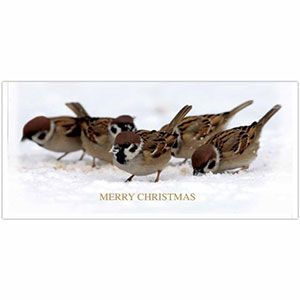 RSPB A Host Of Sparrows Christmas Cards