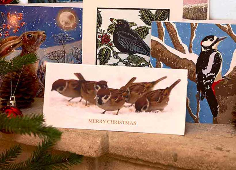 RSPB Christmas Cards