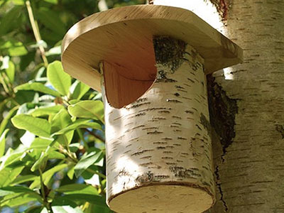 Silver Birch Robin Nest Box