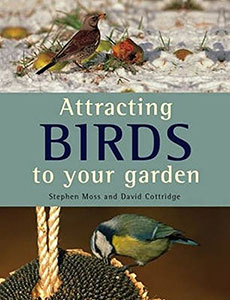 Attracting Birds To Your Garden
