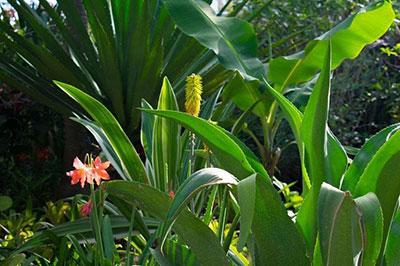 Barney's Hummingbird Garden