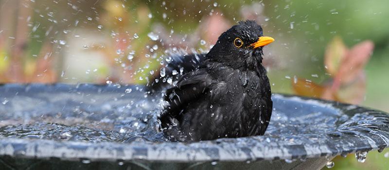 Bird Bath