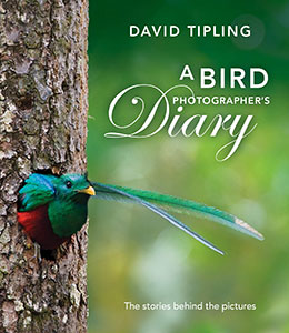 A Bird Photographer's Diary