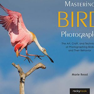 Books About Photographing Birds