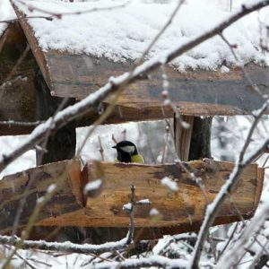 Bird Table Covered In Snow