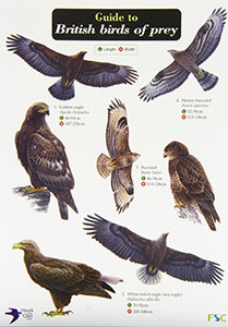 Birds Of Prey Chart