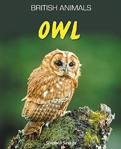 Owl (British Animals)
