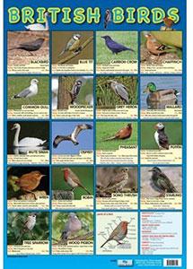 British Birds Chart