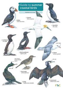 Coastal Birds Chart