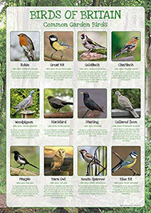 Common Garden Birds Poster
