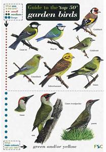 Garden Birds Chart