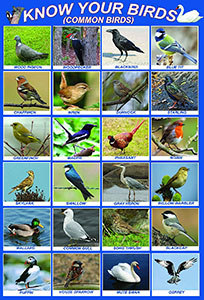 Know Your Birds Chart
