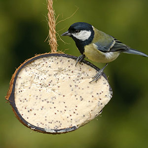 RSPB Buggy Coconut Shell Suet Treats