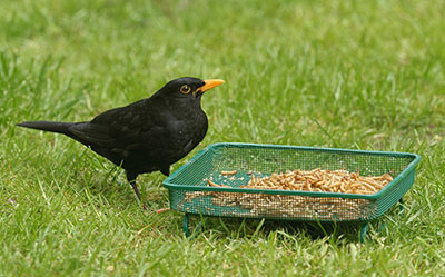 RSPB Mesh Ground Feeder