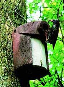 Schwegler Nest Box With Predator Protection
