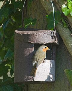 Schwegler Robin Box