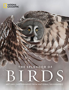 The Splendor Of Birds: Art And Photography From National
