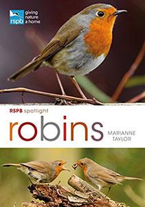 spotligth-robin