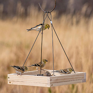 Square Hanging Bird Table