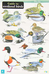 Wetlands Birds Chart