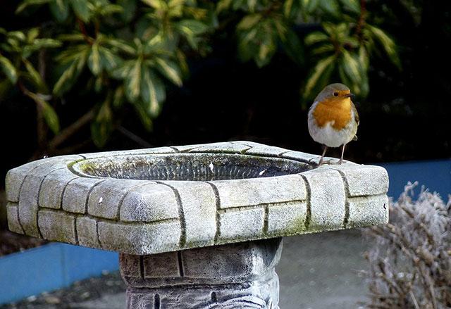 Stone Bird Bath